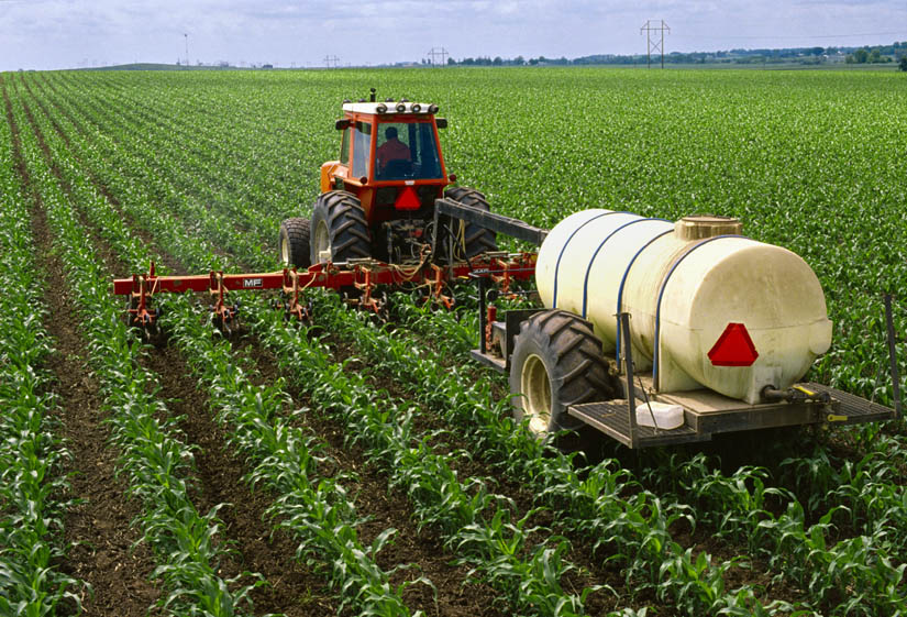 Tractor and applicator side dressing fertilizer in an early growth corn field while simultaneously cultivating the field